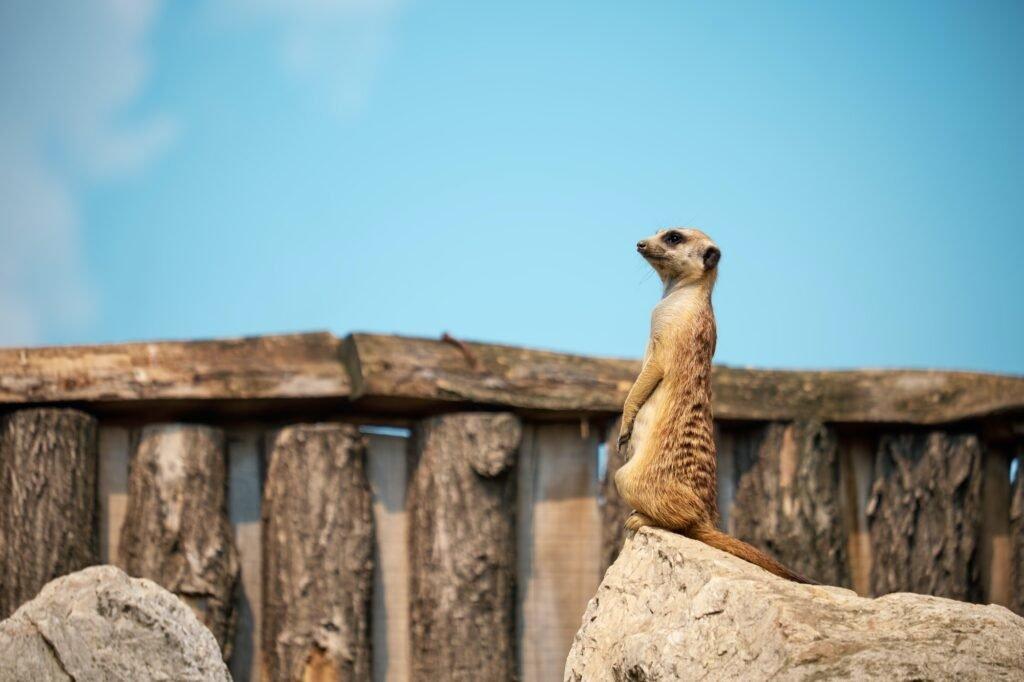 dyr i dyreparken